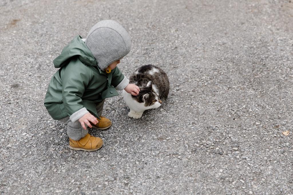 Im Kinderalltag ergeben sich die ersten Begegnungen mit den eigenen Emotionen. Und Katzen.